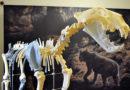 Muzeum odhalí tajemství  jeskynních kostí