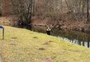 Odpadkové koše skončily v řece